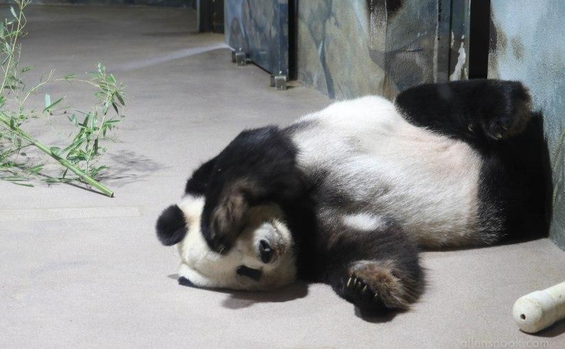 Don't let the dangerously innocuous pandas maul yourcareer